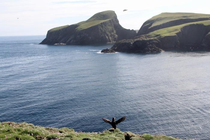Fair Isle Puffin Sheep Rock